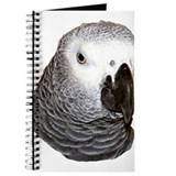 Congo African Grey Journal