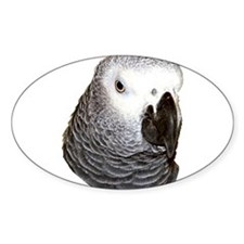 Congo African Grey Oval Decal