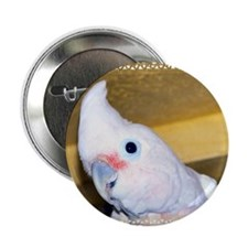 "Goffin Cockatoo 2.25"" Button (10 pack)"