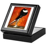 Pigmy Pouter Black Pied Keepsake Box