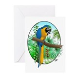 Macaw-BG Greeting Cards (Pk of 10)