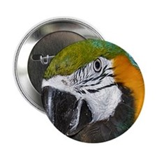 "Blue an Gold Macaw 2.25"" Button (10 pack)"