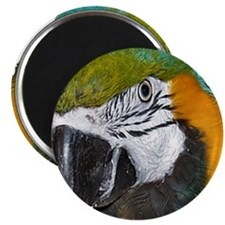 "Blue an Gold Macaw 2.25"" Magnet (10 pack)"