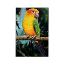 Cute Pet parrot Rectangle Magnet