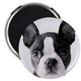 Lucy The Boston Terrier Magnet
