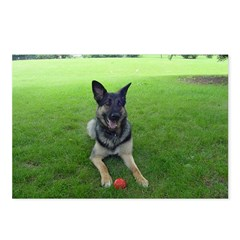 Central Illinois German Shepherd Dog Rescue