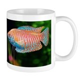 Cute Dwarf gourami Mug