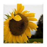 Large Sunflower Tile Coaster