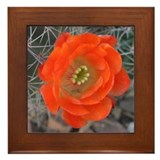 'Scarlet' Hedgehog Cactus Bloom Framed Tile