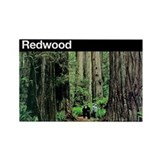 Redwood National Park Rectangle Magnet