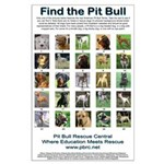 Find the Pit Bull Large Poster