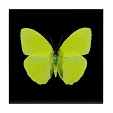 Phoebis sennae Butterfly Tile Coaster
