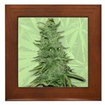 Green Bob Framed Tile