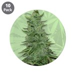 Green Bob 3.5&amp;quot; Button (10 pack)