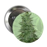 Green Bob 2.25&amp;quot; Button (10 pack)