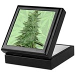 Green Bob Keepsake Box