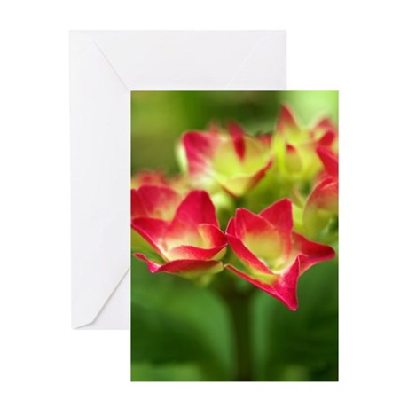 Red Hydrangea Greeting Card