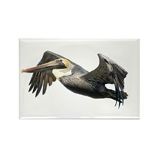Pelican Flying Rectangle Magnet