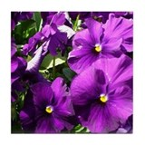 Purple Pansies Tile Coaster