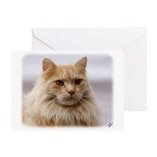 Maine Coon Cat 9Y825D-145 Greeting Card