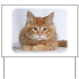 Maine Coon Kitten 9Y226D-373a Yard Sign
