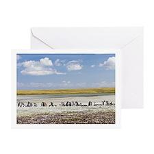 Falklands penguin Greeting Cards (Pk of 10)