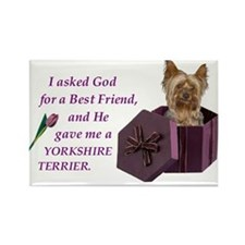 Yorkshire Terrier Rectangle Magnet (PuppyCut)