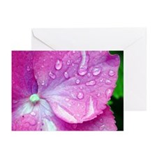 Nantucket Morning Dew Greeting Cards (6)