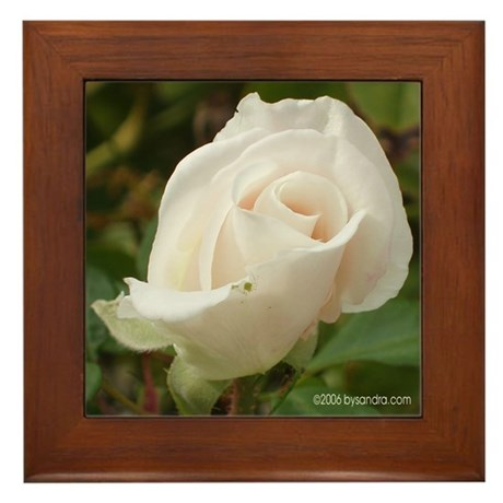 Pale Pink Rose Framed Tile