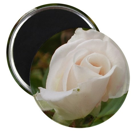 Pale Pink Rose Magnet