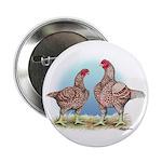 Cornish Chickens WLRed 2.25