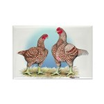 Cornish Chickens WLRed Rectangle Magnet (10 pack)
