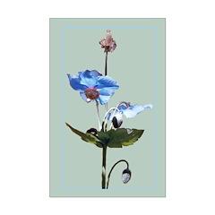 Blue Poppy Mini Poster Print