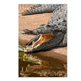 Gator Reflections Postcards (Package of 8)