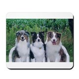 Cute Tri color australian shepherd Mousepad