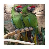 Military Macaw series 4 Tile Coaster