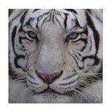 White Tiger Tile Coaster