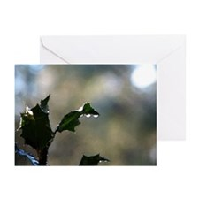Holly with Raindrops Greeting Cards (Package of