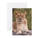Lioness Greeting Cards (Pk of 10)