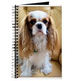 Cuddly Cavalier Chester's Journal