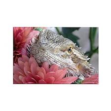 Bearded Dragon 003 Rectangle Magnet (100 pack)