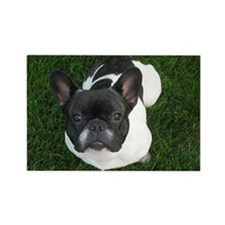 French Bulldog Face Rectangle Magnet