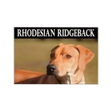 Rhodesian Ridgeback Rectangle Magnet