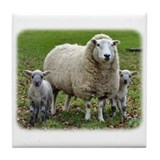 Sheep and Lambs 9R12D-35 Tile Coaster