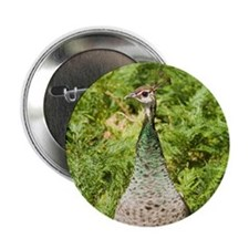 Peahen Button