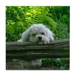 Tired Coton De Tulear Tile Coaster