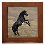 Desert Stallion Framed Tile