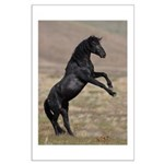 Desert Stallion Large Poster