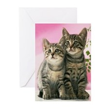 Buddies Greeting Cards (Pk of 10)