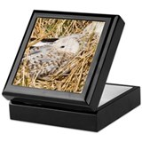Sea Gull Keepsake Box